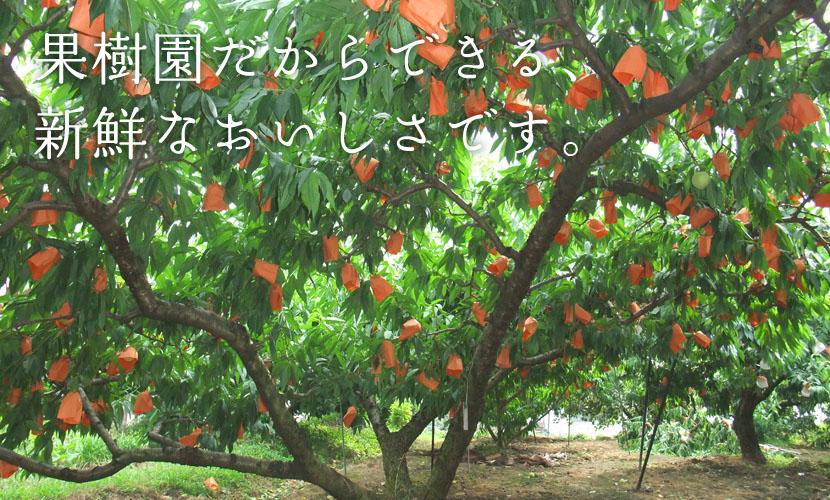 女子小学生を果樹園に連れ込みわいせつ行為、17歳高校生を逮捕 川崎 [転載禁止]©2ch.net [251772464]->画像>8枚